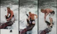 Surfingashark1 460X230